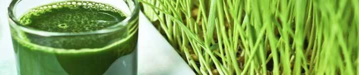 Sok od pšenične trave ili pira