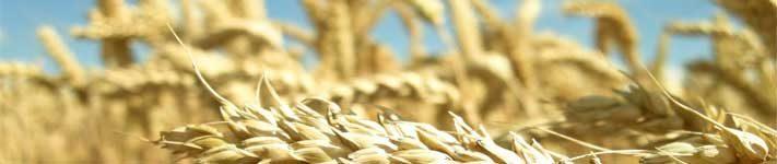 Sirovine u pekarstvu i slastičarstvu; brašno, prašak, soda - 2. dio